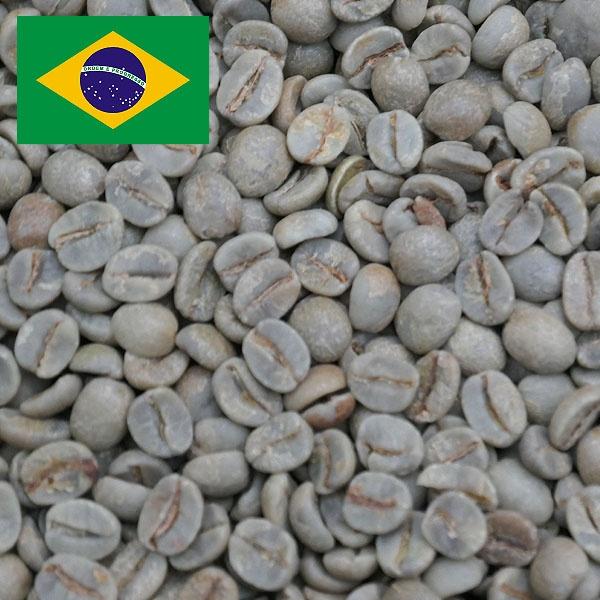 ブラジルNo2 アララ S18